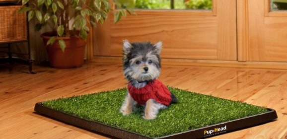 How to pee pad train your dog