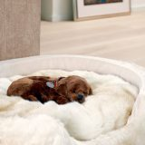 Top Aspects to Remember When Creating a Dog Bed