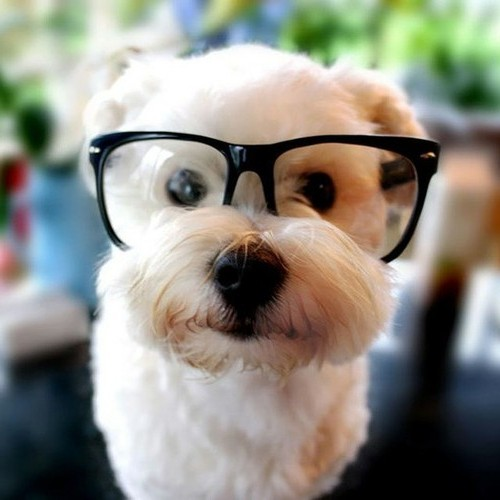 Show Me A Picture Of A Cute Dog