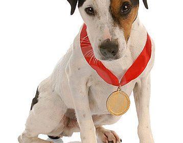 Award Winning Dogs