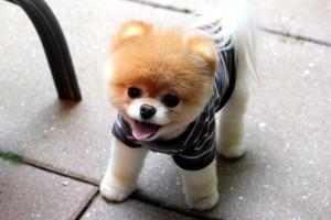 Boo-The-Dog1