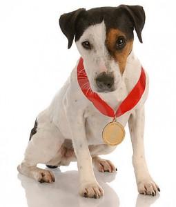 award-winning-dog