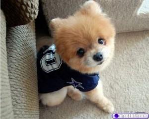 cute-dog-9
