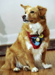 mc-mc-holly-mae-hero-dog-award-jpg-20130531