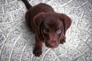 puppy-1047722 960 720