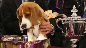 uno-westminster-dog-show-620-79730958
